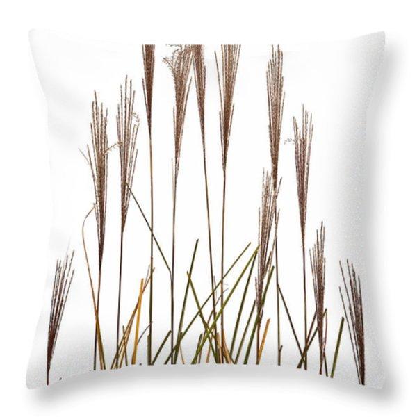 Fountain Grass In White Throw Pillow by Steve Gadomski