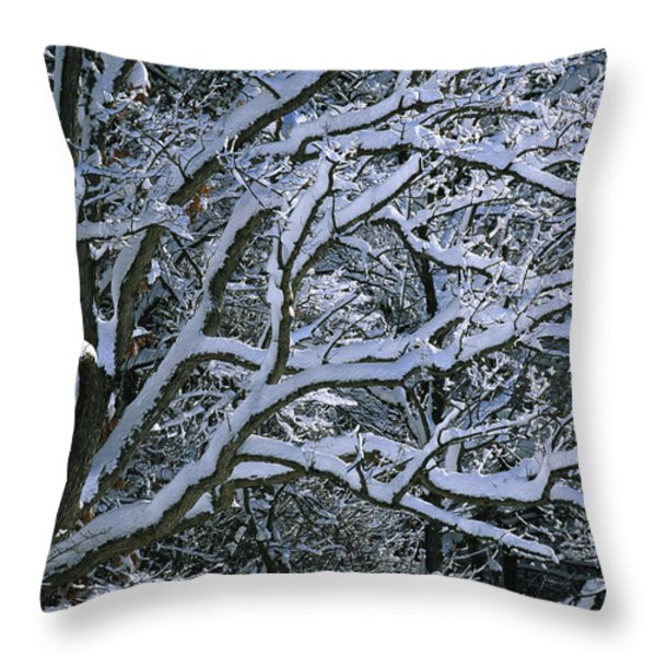 Fresh Snowfall Blankets Tree Branches Throw Pillow by Tim Laman