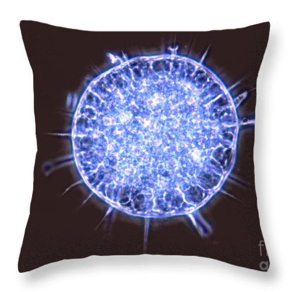 Freshwater Heliozoan Throw Pillow by M. I. Walker