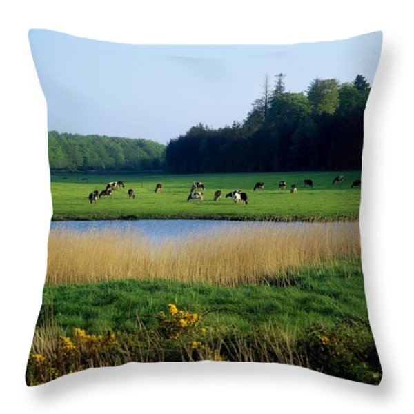 Friesian Cattle, Near Cobh, Co Cork Throw Pillow by The Irish Image Collection
