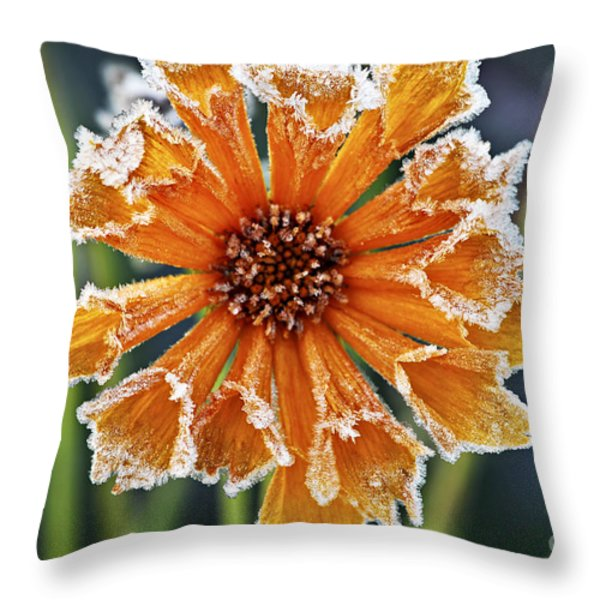 Frosty Flower Throw Pillow by Elena Elisseeva