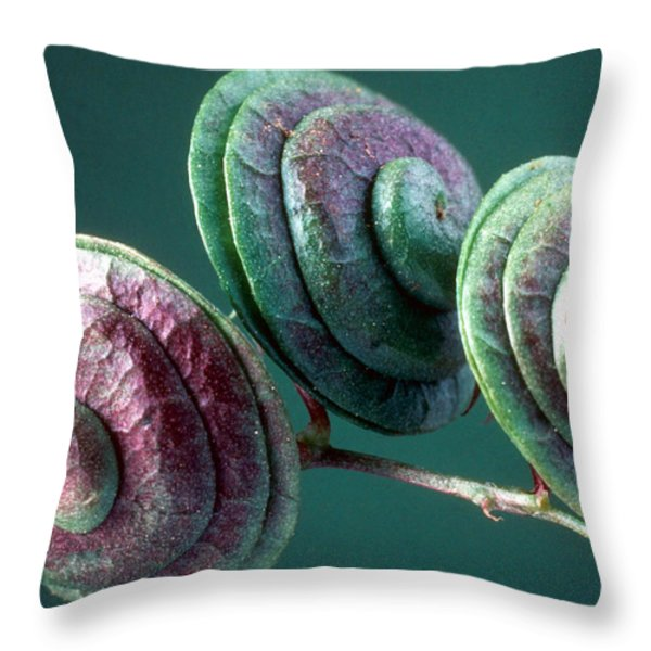 Fruits of Wild Lucerne Throw Pillow by Nuridsany et Perennou and Photo Researchers