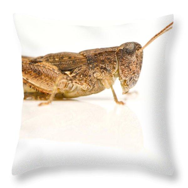 Full Body Studio Image Of An Australian Throw Pillow by Brooke Whatnall