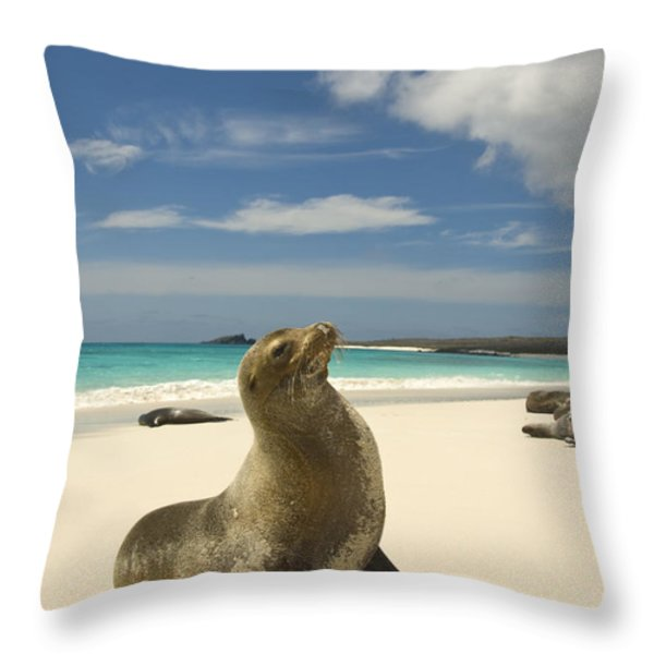 Galapagos Sea Lions Resting On A White Throw Pillow by Annie Griffiths