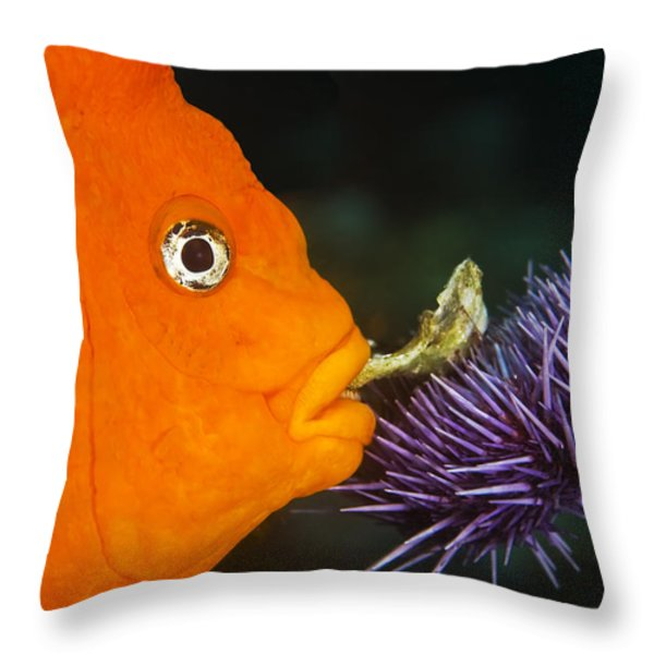 Garibaldi Damselfish Throw Pillow by Mike Raabe
