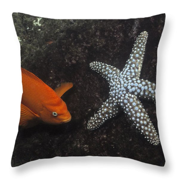 Garibaldi With Starfish Underwater Throw Pillow by Flip Nicklin