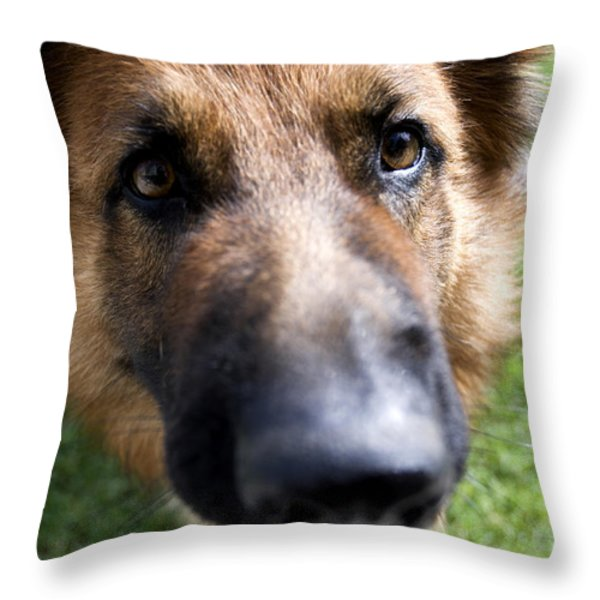 German Shepherd dog Throw Pillow by Fabrizio Troiani