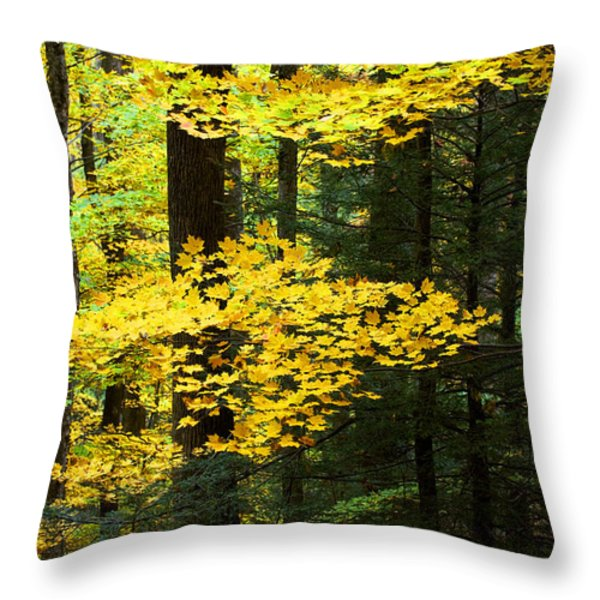 Getting Ready Throw Pillow by Rich Franco