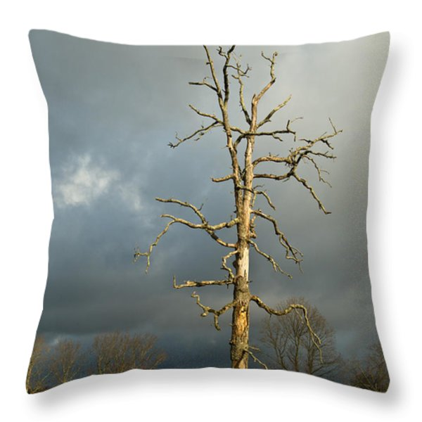 Ghost Tree Throw Pillow by Douglas Barnett