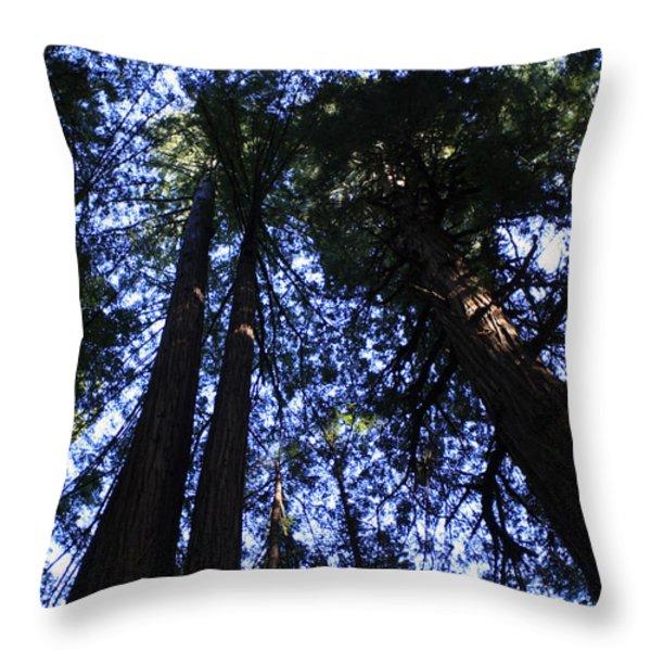 Giant Redwoods Throw Pillow by Aidan Moran