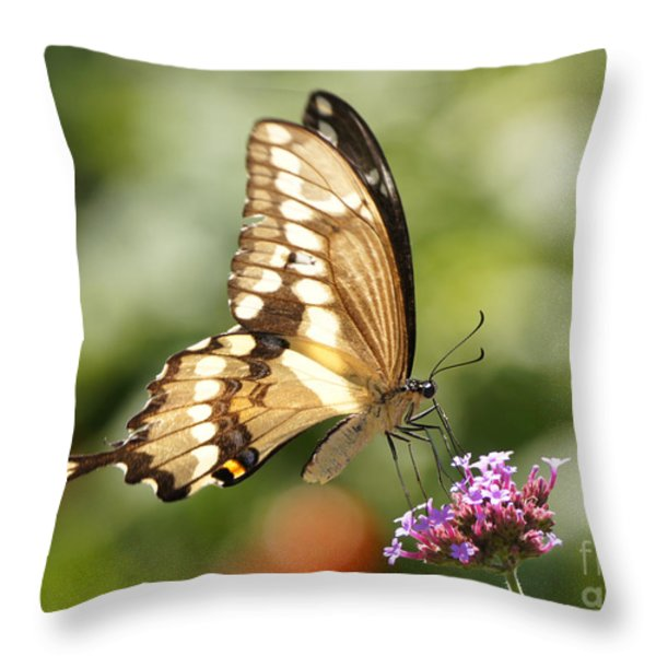 Giant Swallowtail Butterfly Throw Pillow by Robert E Alter Reflections of Infinity