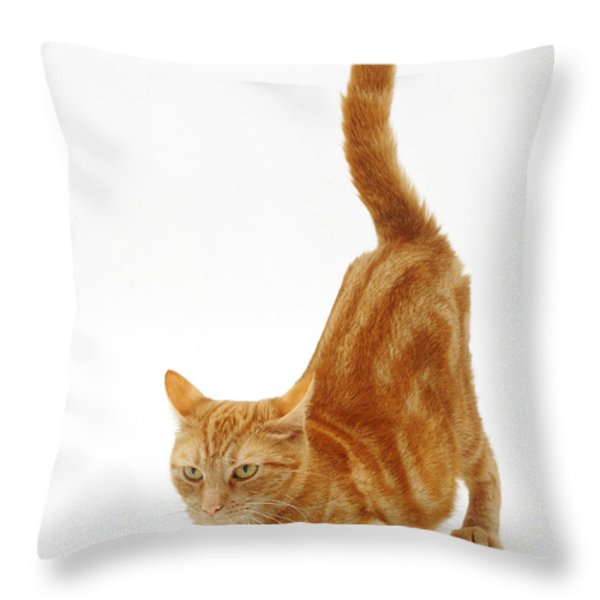 Ginger Cat Throw Pillow by Jane Burton