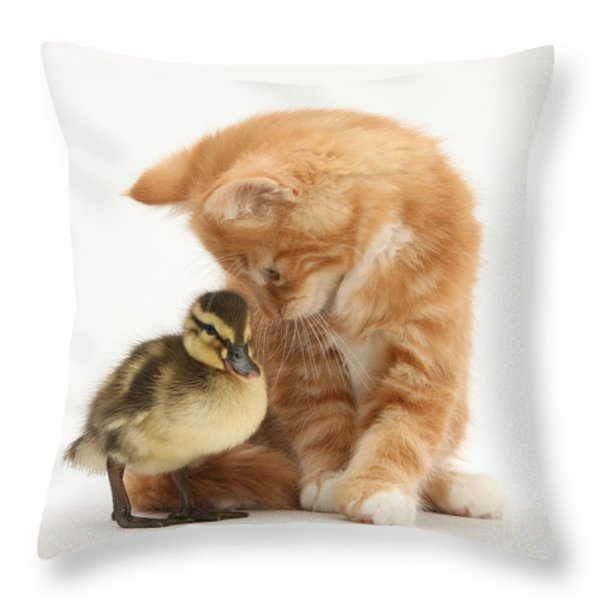 Ginger Kitten And Mallard Duckling Throw Pillow by Mark Taylor
