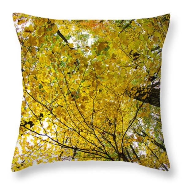 Golden Canopy Throw Pillow by Rick Berk