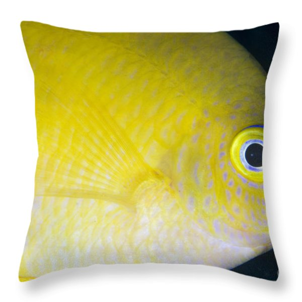 Golden Damsel Close-up, Papua New Throw Pillow by Steve Jones