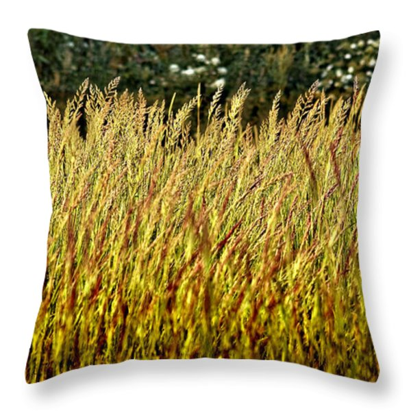 golden grasses Throw Pillow by Meirion Matthias