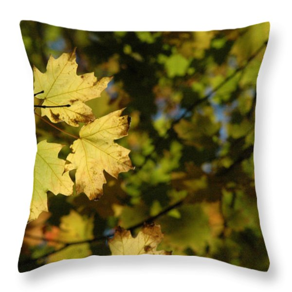 Golden Morning Throw Pillow by Trish Hale