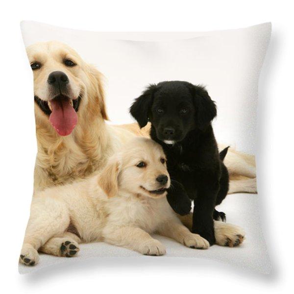Golden Retriever And Puppies Throw Pillow by Jane Burton