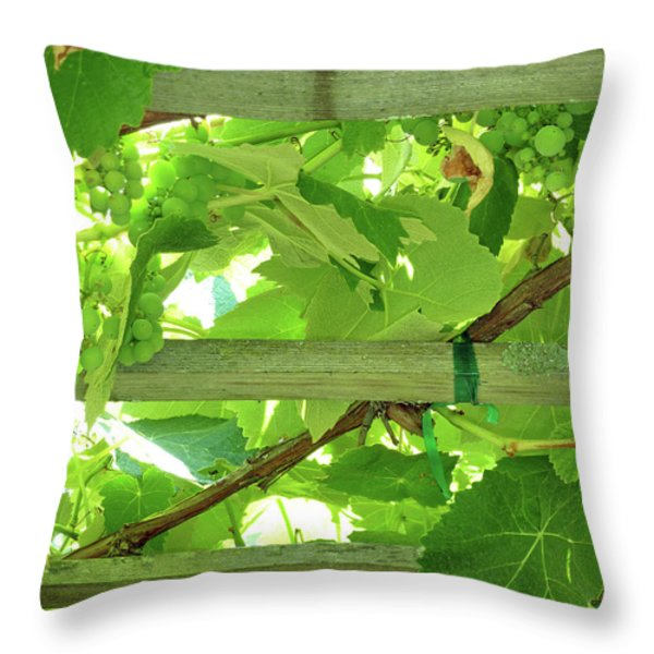 Grape Arbor Throw Pillow by Methune Hively