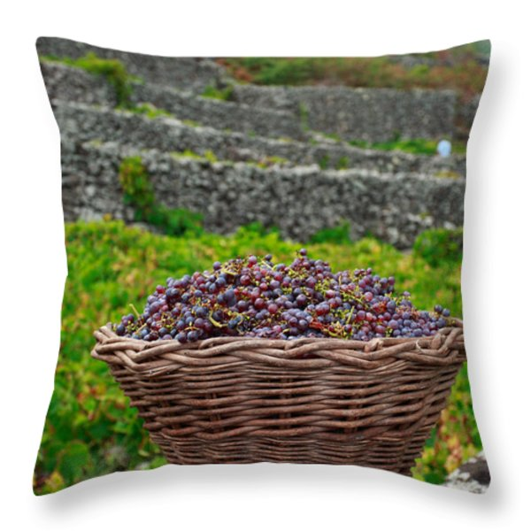 Grape harvest Throw Pillow by Gaspar Avila