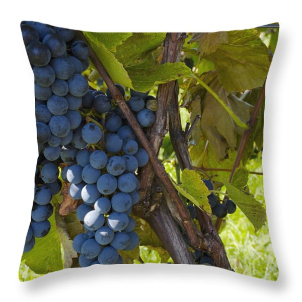Grapes On A Vine Sutton Junction Quebec Throw Pillow by David Chapman