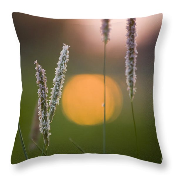 Grass Blooming Throw Pillow by Heiko Koehrer-Wagner