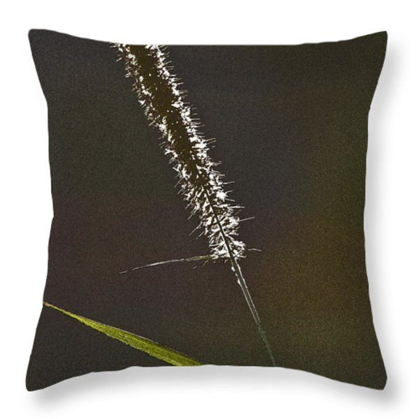 Grass Spikelet Throw Pillow by Heiko Koehrer-Wagner