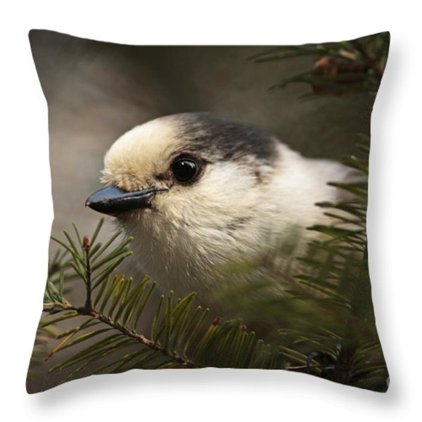 Gray Jay Playing Peek A Boo Throw Pillow by Inspired Nature Photography By Shelley Myke
