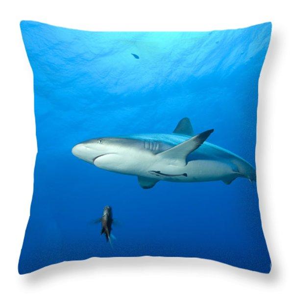 Gray Reef Shark. Papua New Guinea Throw Pillow by Steve Jones