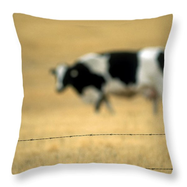 Grazing Cow, Alberta, Canada Throw Pillow by Ron Watts