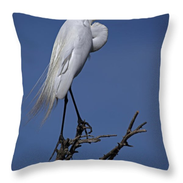 Great Egret, Casmerodius Albus, Perched Throw Pillow by John Cancalosi