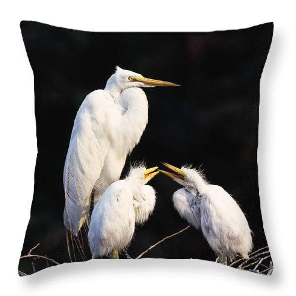Great Egret In Nest With Young Throw Pillow by Natural Selection David Ponton