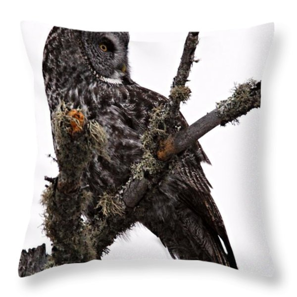 Great Grey Owl Throw Pillow by Larry Ricker