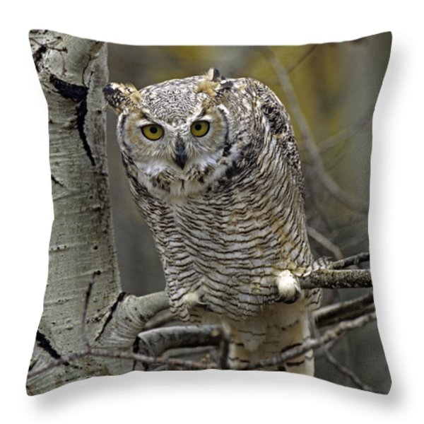 Great Horned Owl Pale Form Kootenays Throw Pillow by Tim Fitzharris