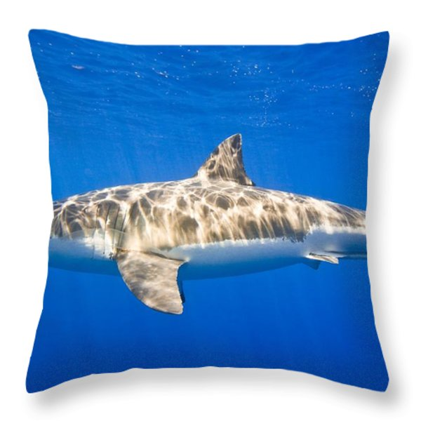 Great White Shark Carcharodon Carcharias Throw Pillow by Carson Ganci