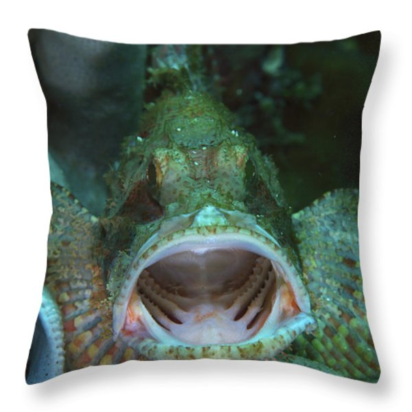 Green Grouper With Open Mouth, North Throw Pillow by Mathieu Meur