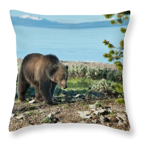 Grizzly Sow at Yellowstone Lake Throw Pillow by Sandra Bronstein