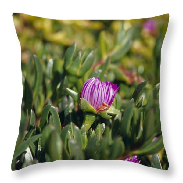 Ground Cover Succulent Pig Face Throw Pillow by Jason Edwards