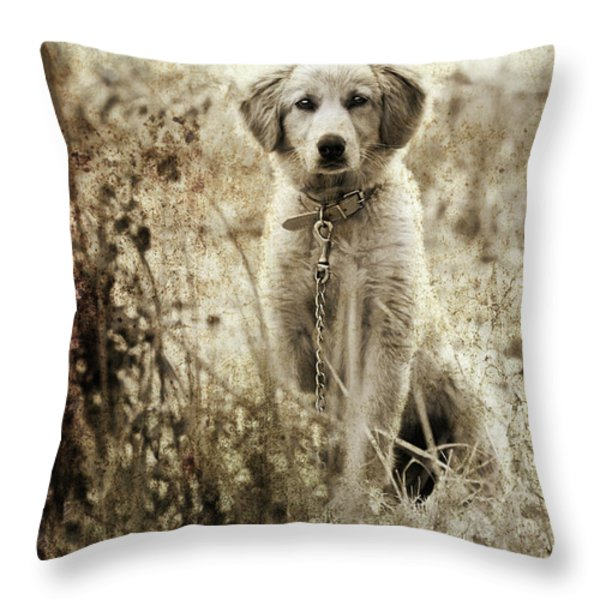 Grunge Puppy Throw Pillow by Meirion Matthias
