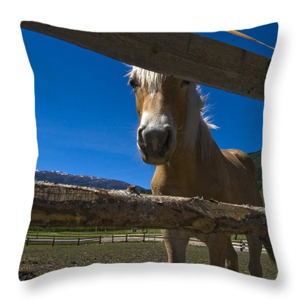 Haflinger Horse Looks Through A Fence Throw Pillow by Todd Gipstein