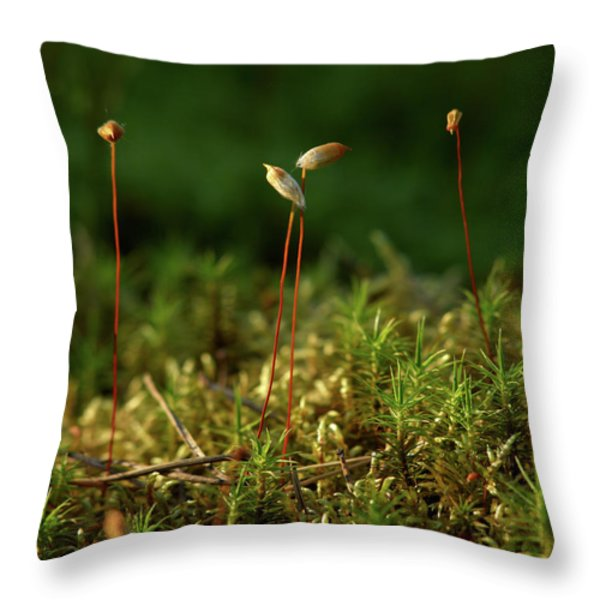 Haircap Moss Throw Pillow by Jouko Lehto