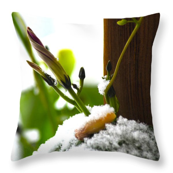 Hanging On Throw Pillow by Elaine Mikkelstrup