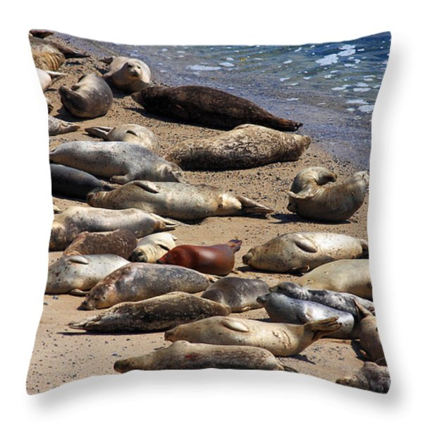 Harbor Seals Sunbathing On The Beach . 40d7553 Throw Pillow by Wingsdomain Art and Photography