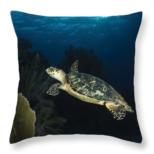 Hawksbill Sea Turtle Swimming Throw Pillow by Todd Winner