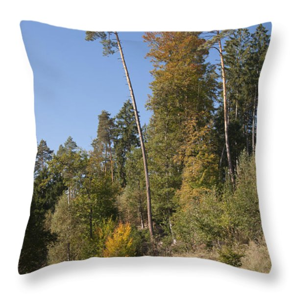 Hiking in the forest Throw Pillow by Matthias Hauser