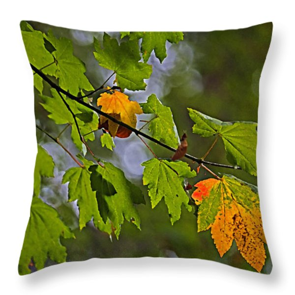 Hint Of Autumn Throw Pillow by Bonnie Bruno