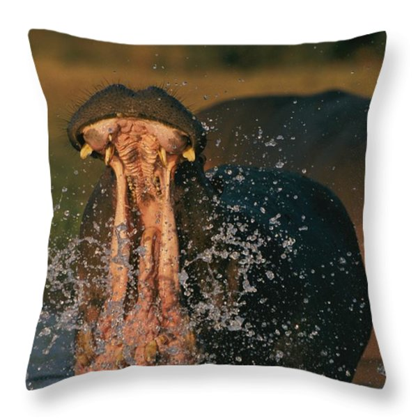 Hippopotamus Hippopotamus Sp., Zambezi Throw Pillow by Chris Johns