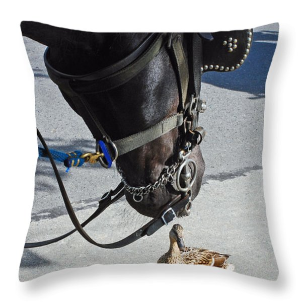 Horse Feathers Throw Pillow by Lisa  Phillips