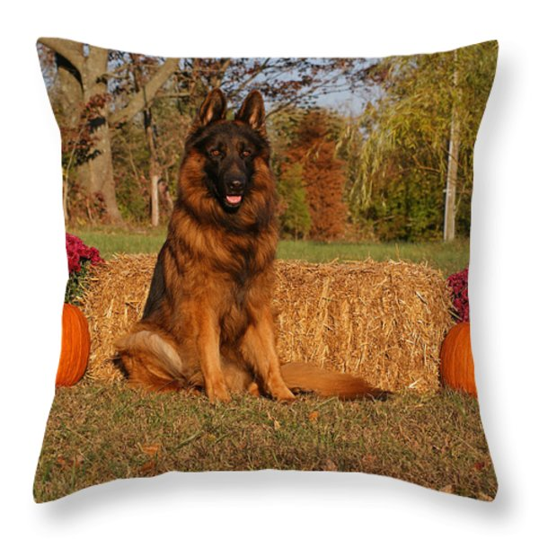 Hoss In Autumn II Throw Pillow by Sandy Keeton