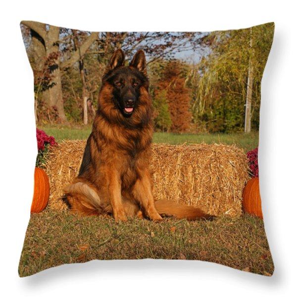 Hoss in Autumn II Throw Pillow by Sandy Keeton
